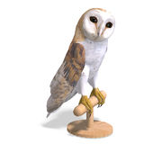 Barn Owl Bird. 3D rendering with clipping path. And shadow over white Royalty Free Stock Photo