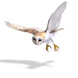 Barn Owl Bird. 3D rendering with clipping path Royalty Free Stock Photography