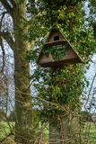 Bird box on a tree. A barn owl bird nesting box fixed to a tree trunk in a rural location Stock Image