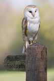 Barn Owl On Footpath Sign Stock Photo