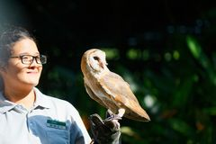 Barn Owl with its Handler. At Jurong Bird Park. Jurong Bird Park is an aviary and tourist attraction in Jurong, Singapore. The bird park, managed by Wildlife stock photography