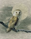 Barn Owl. Picture of a Barn owl on a branch with background Stock Photo
