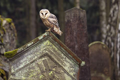 Owl on the tomb Royalty Free Stock Images