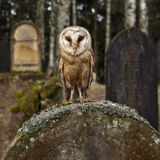 Owl on the tomb stock photo