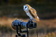 Barn owl sitting on a camera Royalty Free Stock Image