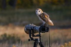 Barn owl sitting on a camera Stock Images