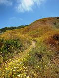 Barn Owl Trail Flowers. Hiking trail, Forrestal Reserve, Rancho Palos Verdes, CA Stock Images