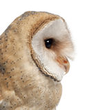 Barn Owl, Tyto alba, 4 months old, close up Royalty Free Stock Photos
