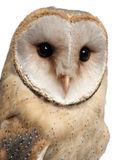Barn Owl, Tyto alba, 4 months old, portrait Royalty Free Stock Photos