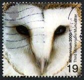 Barn Owl UK Postage Stamp Royalty Free Stock Photos