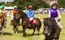 Barn på deras shetland ponnyer Royaltyfri Bild