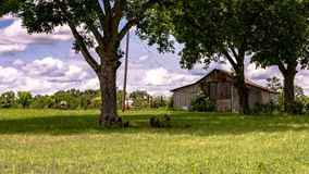 Barn in a pecan grove. Barn and grazing livestock in an old pecan grove in the southern United States Stock Photo