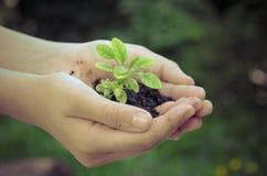 Barn planterar i händer Arkivbilder