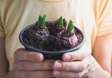 Barn planterar i händer Plantera lökformiga växter, tulpan, hyacinter Royaltyfria Foton