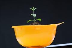 Barn planterar i hardhat Arkivbild