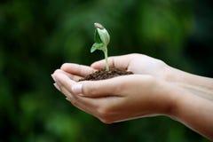 Barn planterar i händer Royaltyfri Fotografi