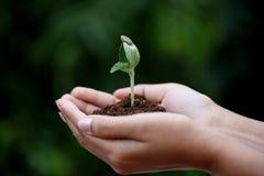Barn planterar i händer Arkivbild