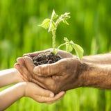 Barn planterar mot grön bakgrund fotografering för bildbyråer