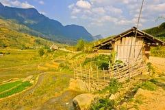 Barn in rice crops Stock Photo