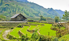Barn in rice terraced field Royalty Free Stock Images