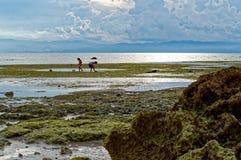 Barn söker efter havsskal under ett lågvatten Royaltyfri Fotografi