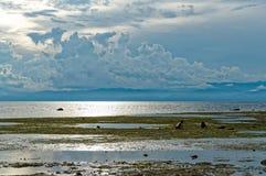 Barn söker efter havsskal under ett lågvatten Arkivfoton