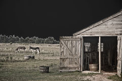 Barn Scene. Donkeys grazing near a barn on a farm in Edgartown, Massachusets, Martha's Vineyard, Cape Cod Stock Images