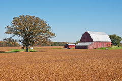 Barn Scene. A weathered red barn on a farm in rural Ohio. The barn is standing on the edge of a harvested field filled with orange crop stubble near a solitary stock photo