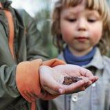 Barn ser en padda grunda i skogen royaltyfri foto