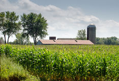 Barn  and silo in a Michigan corn field Royalty Free Stock Photography