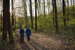 Barn som går i en vårskog royaltyfri bild