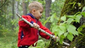 Barn som går i höstpark En pojke står nära ett stort träd med en pinne i hans händer Fotografering för Bildbyråer