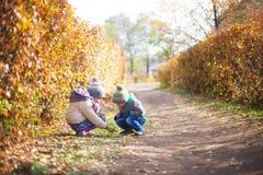 Barn som leker med den fallna hösten, låter vara i park Fotografering för Bildbyråer