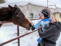Barn som matar en häst Arkivfoton