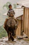 Barn som rider en buffel Arkivbilder