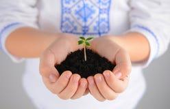 Barn som rymmer den unga växten med jord i händer som befruktning för jorddag fotografering för bildbyråer