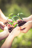 Barn som rymmer den unga växten i händer Arkivbild