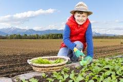 Barn som samlar sallad i den trädgårds- grönsaken Royaltyfria Foton