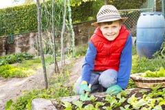 Barn som samlar sallad i den trädgårds- grönsaken Arkivbilder