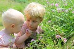 Barn som ser vildblommor Arkivbilder