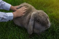 Barn som slår en kanin royaltyfria bilder