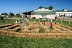 Barn som spelar i en labyrint Royaltyfri Foto
