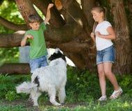 Barn som spelar med hunden i trädgård arkivbilder