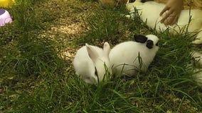 Barn som spelar med liten kanin i en gr?smatta med gr?nt gr?s Kamratskap mellan barn och husdjur arkivfilmer
