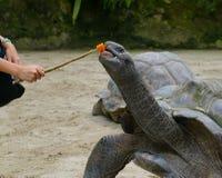 Barn som spelar med sköldpaddan på zoo Royaltyfria Foton