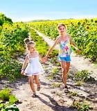 Barn som stöter ihop med det utomhus- solrosfältet. Arkivbild