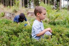 Barn som väljer blåbär royaltyfri bild