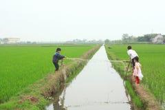 Barn spelar i risfältfältet i bygden av norden av Vietnam Arkivbild