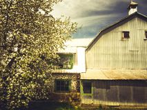 A barn in spring. An old barn that is in a row. Hens live there stock images