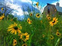 Barn. Sunflower, summer green grass Royalty Free Stock Photo
